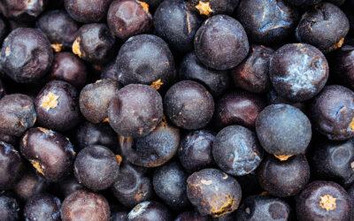 Das große Aromenspektakel – Die Zutaten des Gins