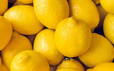 Unsere Botanicals Teil 3: Zitronenschale